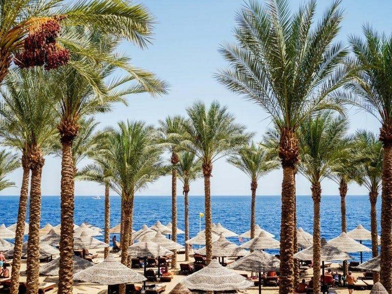 Egipt, Sharm El Sheikh All inclusive - Grand